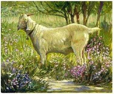Dafen Oil Painting on canvas -animal021